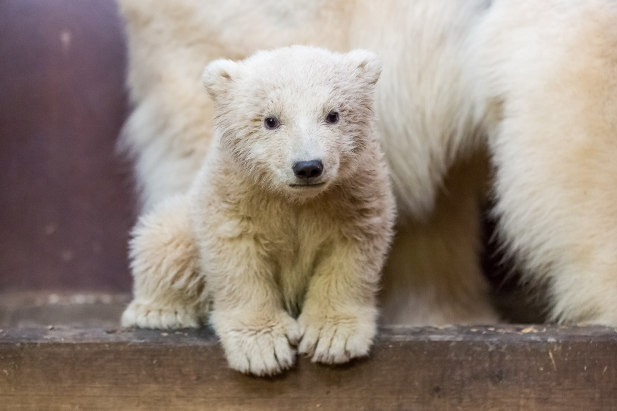 полугодовалый медвежонок фото этом нужен небольшой